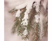 Winter Woodland Photography, Fine Art Photograph, Tree Nature Snow, Fresh Snowfall, Soft Pale Pastel Home Decor, Woods Nature Art