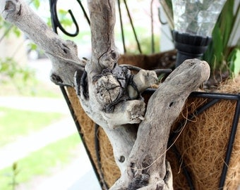 Organic Driftwood Sculpture ,  One of a Kind Surf Tumbled Beauty for the Beach House