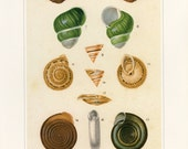 Sea Shells Print Book Plate SALE Buy 3, get 1 FREE