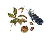Fall Collection - Chestnut, acorns, maple keys, crow feather, dried leaf - Original Watercolor