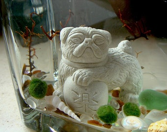 Live Marimo Balls and Mini Foo Pug Dog Mini Aquarium / Terrarium