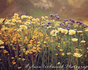 Country photography wildflower photography nature photography shabby chic  yellow daisy rustic wall art   Fine Art Photography Print