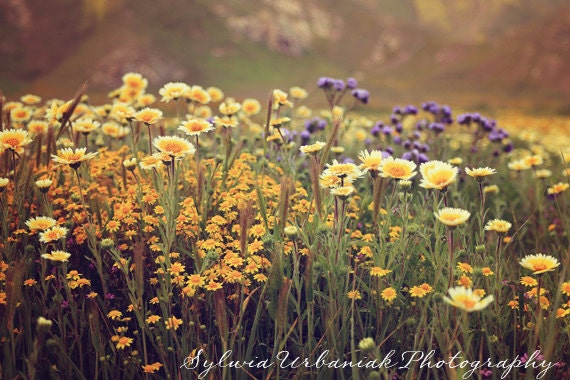 wild flower photography - photo #25