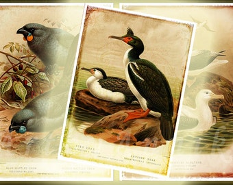 Birds of New Zealand - 2,5x3,5 inch ATC, ACEO cards, Digital Collage Sheet for Scrapbooking