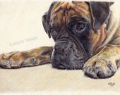 Time Out - Boxer Dog LARGE A4 A3 or A2 Limited Edition Print of original pencil drawing by RussellArt