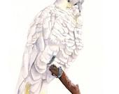 Cockatoo watercolor Painting   bird art  print of watercolor painting 5 by 7 size wall art print - bird art print