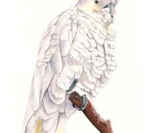 Cockatoo watercolor Painting   bird art  print of watercolor painting 5 by 7 size wall art print - bird art print