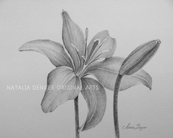 "Lilies, MATTED 16x20"" ORIGINAL Drawing, Day Lily, Flowers, Lilies, Pencil, Grey, Black, Birthday Gift, Anniversary Gift, Black Mat"