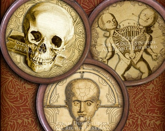 Steampunk Goth Victorian Antique Anatomy - Skulls, Skeletons, etc. - 1.5 inch Circles - Digital Collage Sheet - Printables