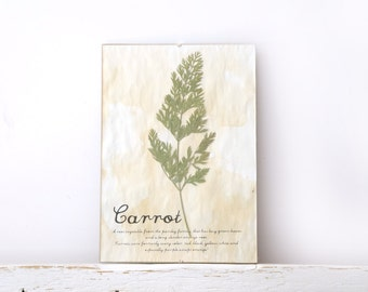 Dried Pressed Flowers- Carrot leaf in Frame (1)