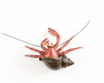 Hermit Crab No.10 Limited Edition Bronze