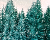 Winter Photography,  Holiday Decor, Christmas Tree Photo, Snow Forest, Pine Tree, Emerald Green - Where the Snow Falls