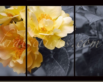 3 Piece Photograph Set, Black White Yellow Roses, Home Office Wall Decor Gift Idea for Her Original Wall Art, Fine Art Photography, Romantic