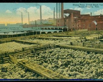 Omaha Nebraska Postcard Sheep Pens Antique Unused Divided Back Era 1907 to 1915