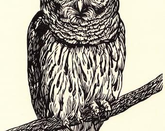 Barred Owl linocut