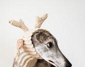 Coy Greyhound Boy, Brindle Greyhound Picture, Greyhound Gift, Greyhound Rescue, Dog Photograph, Greyhound Photograph