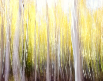 Aspen Trees Fall Forest Aspens Ghosts Autumn Golden Leaves Wall Art Colorado Rustic Cabin Lodge Photograph