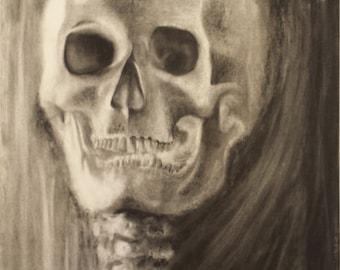 Skull Study - Original Charcoal Drawing