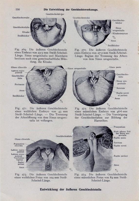 Items similar to MATURE Medical Page Anatomical Diagram ...