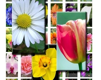 Flowers Summer Spring Blossoms Digital Images Collage Sheet 1x2 inch Rectangles Domino Commercial INSTANT Download RD09