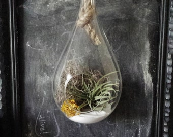 Yellow Flower Terrarium // Air Plants