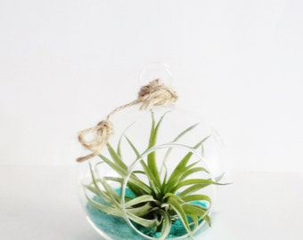 Air Planter Gifts in Turquoise // Air Plants