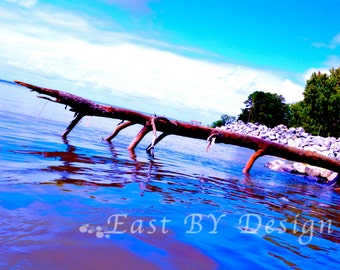 Colorful Tree in Water, James River, Fallen Tree