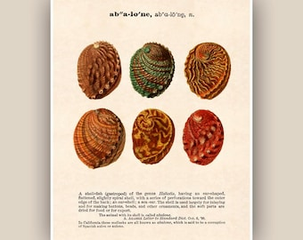 Seashell Print, Vintage abalone image, vintage Dictionary definition text, Sea shell art, Nautical art,  Coastal Living, beach cottage decor
