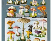 mushroom print from a vintage French dictionary, a printable digital download, no. 263