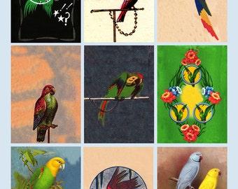 vintage parrots, digital collage sheet no. 202