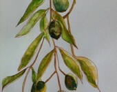 RESERVED for Erika: Green Olives, Original watercolor on paper