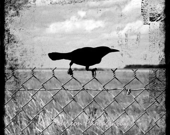 Black Crow Photo, Raven Grackle print, Black & White photos, Cottage Chic Grunge TTV Wall Art, Square Ebony Gray Home Decor, 5x5, 8x8 10x10