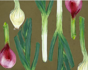 Spring Onions - Boxed Set of 8 Cards