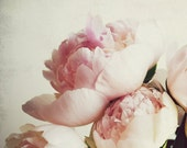 "Peony photography - flower photograph - pale pink pastel - girls room decor - romantic floral wall art ""Peony One"""