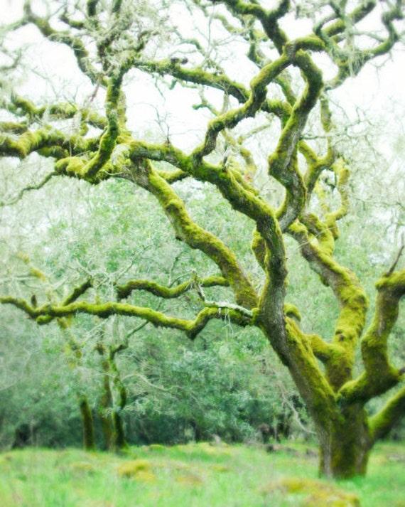 Oak tree photograph, woodland nursery,  fairy tree, dreamy landscape, moss green, green wall art 8x10 16x20  'Mossy Woods'