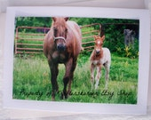 Photo Card Baby Horse, Foal and Mare Front View