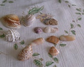 Grouping Of Different Shells for a Dish or to Make Something Special