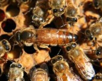 Queen Bee Honey - CSA