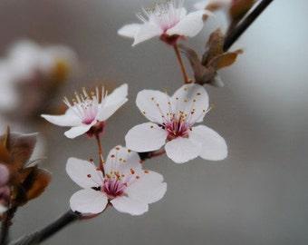 Blooming Tree - 5x5 Fine Art Photograph