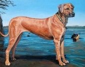 """BELLACHICA, custom Pet Portrait Oil Painting, Dog Painting of a Rhodesian Ridgeback, by puci, 12x16"""""""