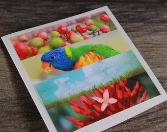Birthday card, Note card, Nature card, blank card, rainbow colours, bird photo, blue sky clouds, flower card, Mother's Day card, unique card