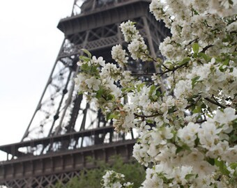 Paris Photography, I love Paris in the Spring, White Blossoms, Eiffel Tower, Paris Home Decor, White Wall Art Paris, Architecture