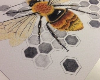 PRINT: Honeycomb Bee Illustration