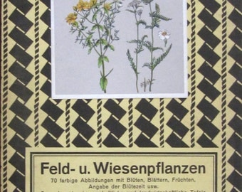 Original Graser's Antique German Botanical Lithograph Prof. Dr. Raschkes Field and Meadow Flowers