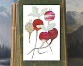 Radishes // 6 Card Folio // Fawnsberg Stationery