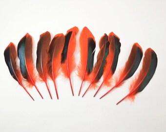 Mallard Feathers, Iridescent Green Wing - Red (10pcs)