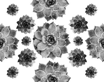 Succulents Collage B&W 8x10. Fine Art Photographic Natural History Print. Scandinavian style. Natural Home Decor. Kitchen