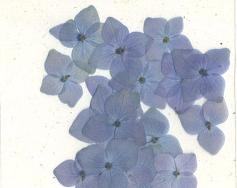 Bright Blue Hydrangea Pressed Flowers - pack of 25 1/2 inch diameter Flat Rustic Decor