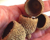 20 bur burr natural acorn caps doll hats craft flat eco friendly doll birds nest