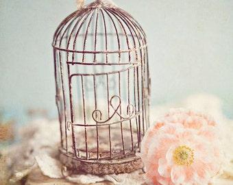 Poppies & Birdcage